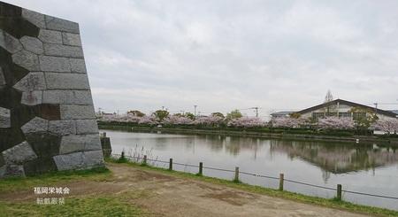 亀甲石垣より南濠の桜並木.jpg