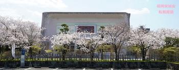 大隈重信記念館 桜.jpg