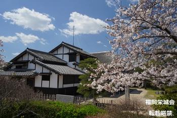 大隈重信記念館 生家と桜.jpg