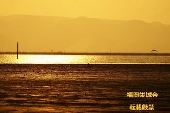 干潟の夕景 ブログ用.jpg