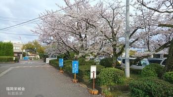 成美女学校跡の桜.jpg