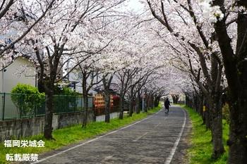 桜並木に自転車.jpg