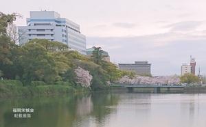 県庁 北濠の桜と楠 1.jpg
