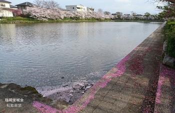 西濠の桜.jpg