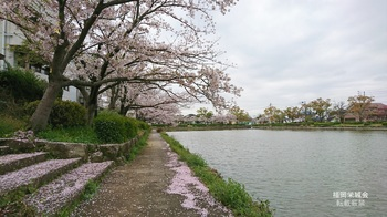 西濠の桜 南.jpg